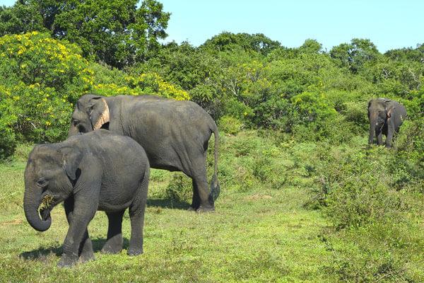 Millennium Elephant Foundation Sri Lanka